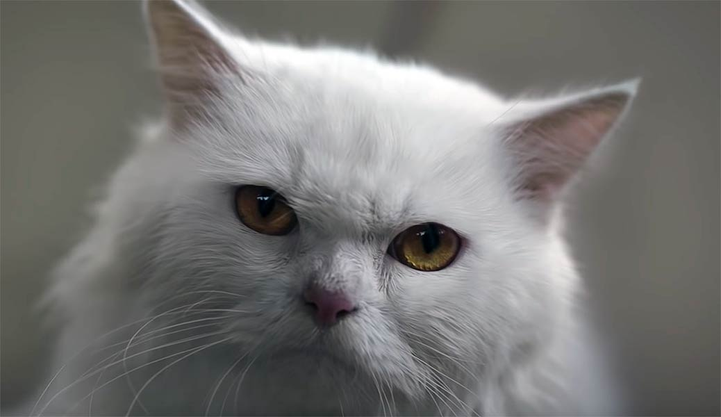 Condescending Cat Advertisement for Honda in India Racks up 27 Millions Views in a Day