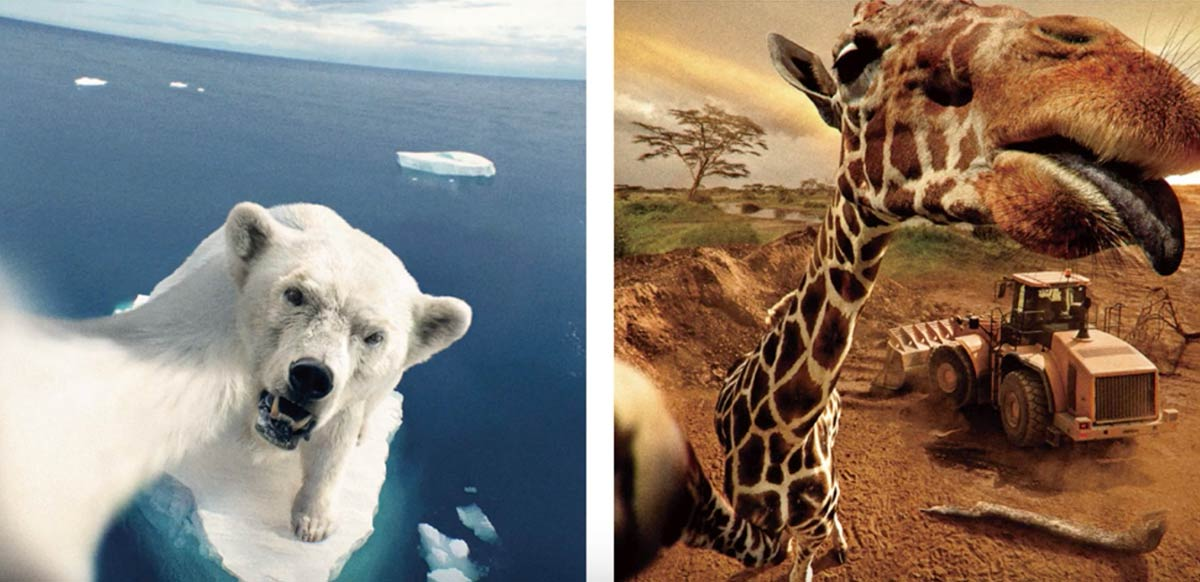 Animal Selfies Campaign Tries to Get Japan to Dig Deeper in Support of Endangered Wildlife