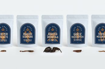 Garlic Grasshoppers & Roasted Tarantula Snacks Now on Tap from Tiger Beer in New Zealand
