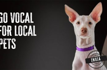 Giving Stray Pets a Voice in for World for All Animal Care & Adoptions Campaign