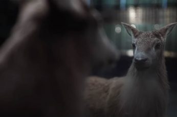 Glenfiddich Asks 'Where Next?' in New Global Campaign