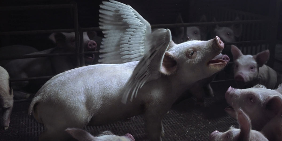 Pigs Fly as Animals Australia Highlights Factory Farm Conditions