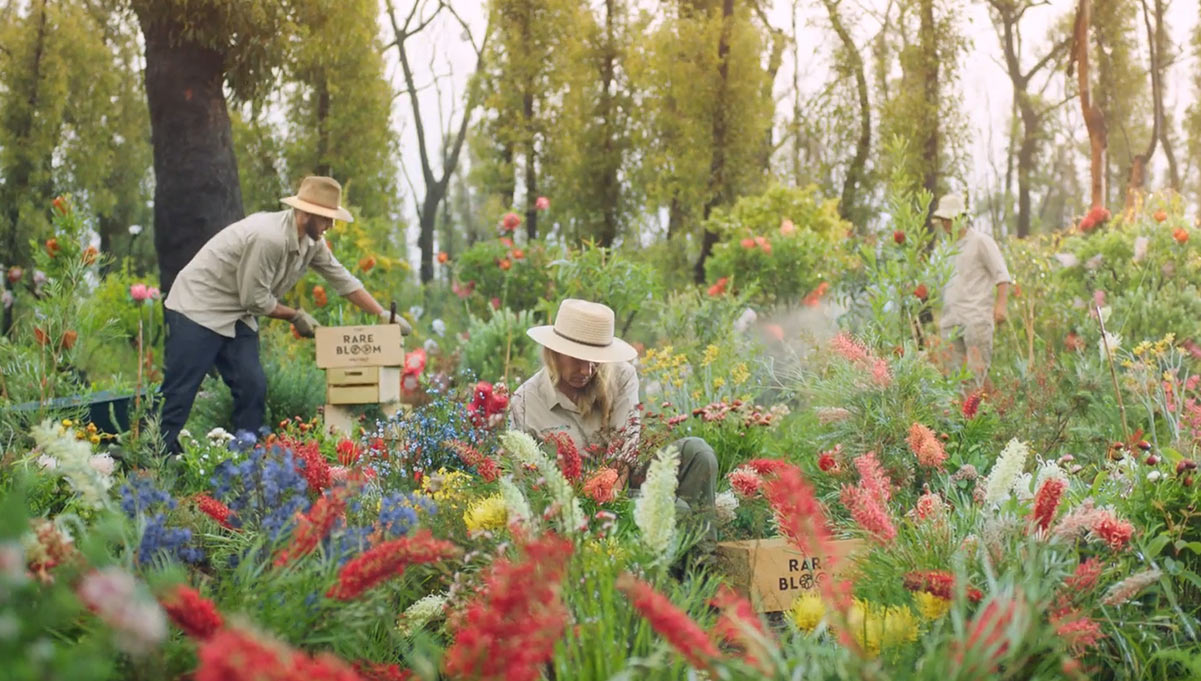 Botanic by Air Wick Launches The Rare Bloom Project with WWF