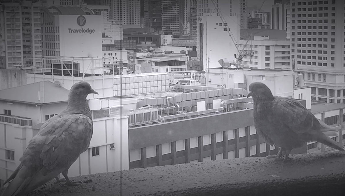 Pigeons on a Ledge Help Parents Explain Losing Their Jobs to the Kids