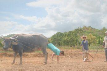 DiskarTech Man Climbs From Water Buffalo's Ass to Explain Their Loan Options