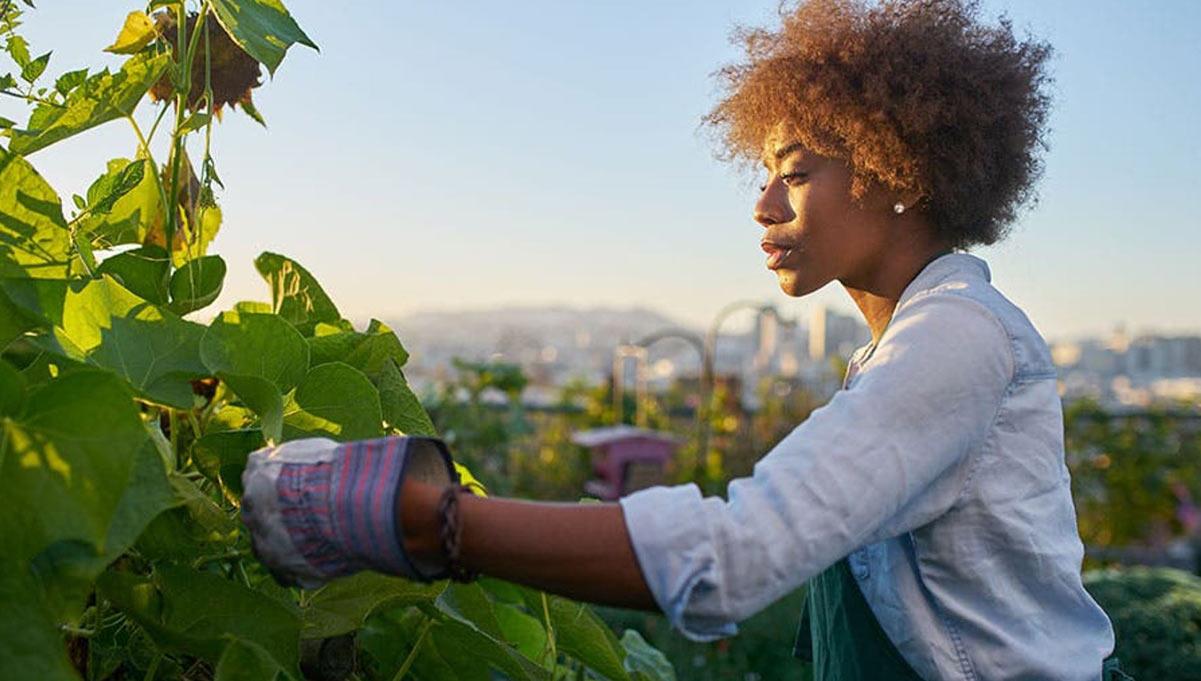 Dentsu's 2020 Social Impact Report Shows Gains in Social and Environmental Goals