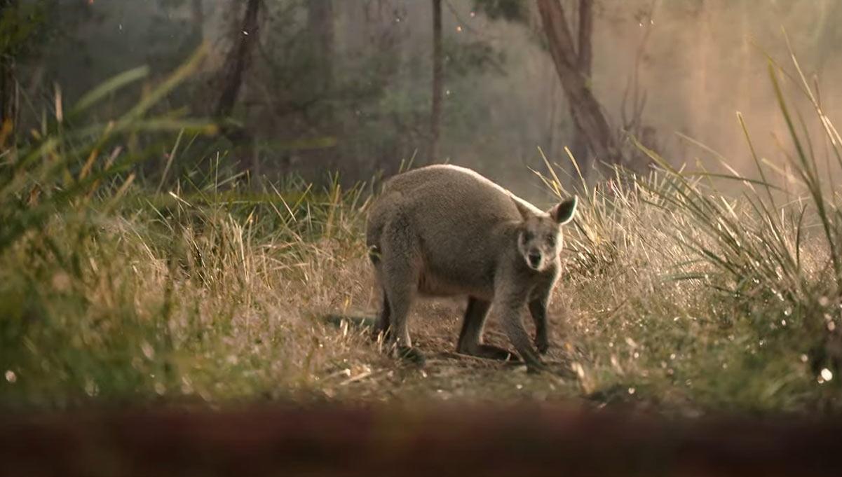 WWF-Australia Calls on the Good of Australian's Nature to Protect Australia's Nature