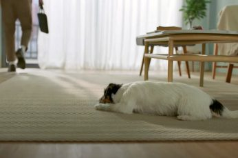 AP Townhome Campaign Looks at What Your Dog is up to When You're Not at Home