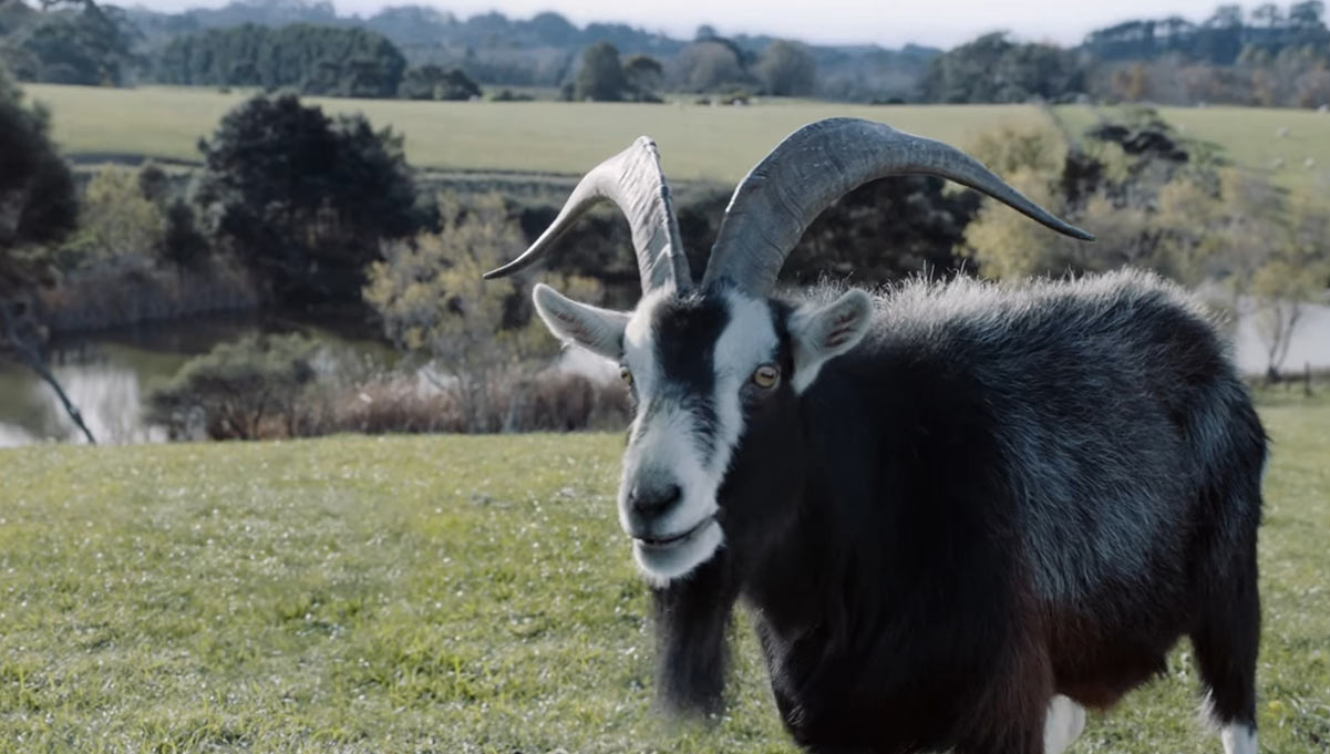 Sky New Zealand Cheats at Advertising by Using Cute Talking Animals